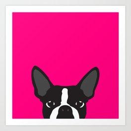 Boston Terrier Hot Pink Art Print