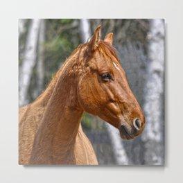 Equus Metal Print