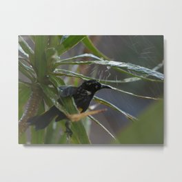 Sprinkler Relief from the Summer Heat Metal Print