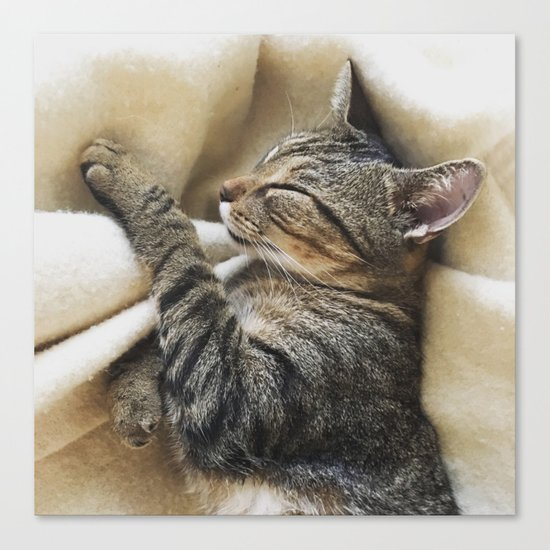 It's A Cat's Life Canvas Print