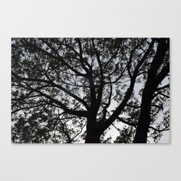 Tree Silhouette Black and White Moonfire One  Canvas Print