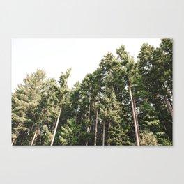 Delight Canvas Print