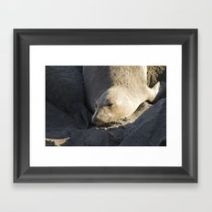 Elephant Seal: Contentment Framed Art Print