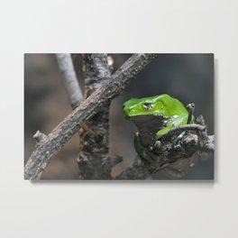 Monkey Frog Metal Print