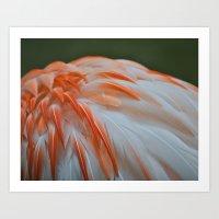 Flamingo Plumage Art Print