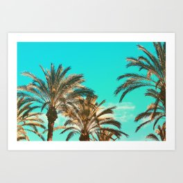 Tropical Palm Trees  - Vintage Turquoise Sky Art Print
