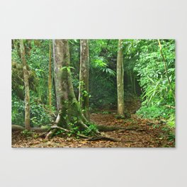 Jungle in Tikal, Guatemala Canvas Print