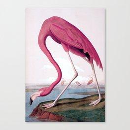 Flamingo - John James Audubon, (1827–38) Canvas Print