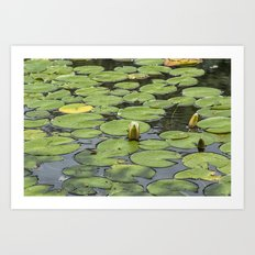 Lily pad sunshine Art Print