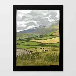 Cows in Dingle, Ireland Canvas Print