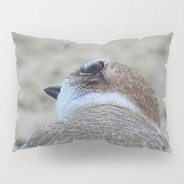 Snowy Plover Scan Pillow Sham