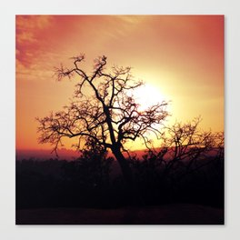 Griffith Tree Canvas Print