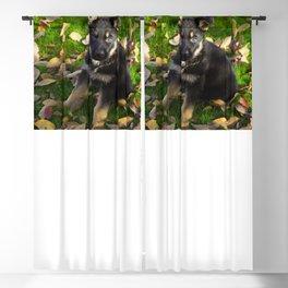 Little German Shepherd puppy Blackout Curtain