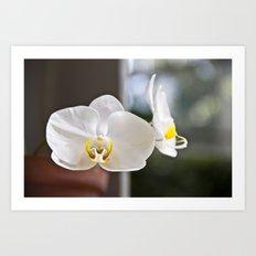 White Orchid Art Print