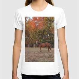 Where is My Horse Hay? T-shirt