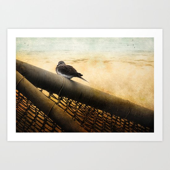 Mourning Dove on Beach Art Print