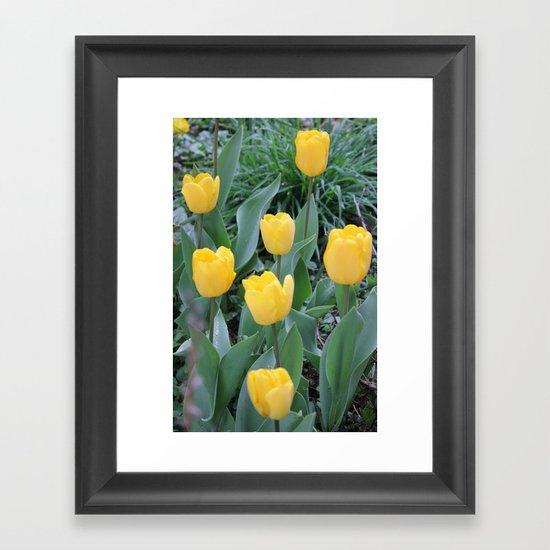 Appledorn Tulips Framed Art Print