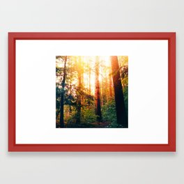 Sundown Woods Framed Art Print