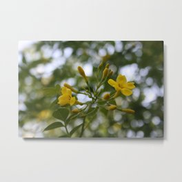 Shaded Carolina Jessamine Metal Print