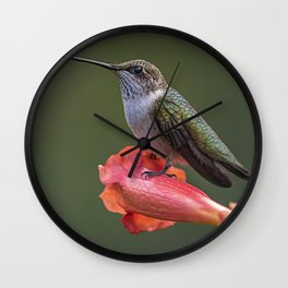 Humming bird resting on a flower Wall Clock
