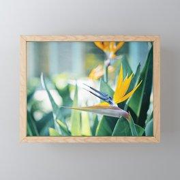 Bird of Paradise Photography, Green Orange Aqua Blue, Tropical Flower Nature Botanical Framed Mini Art Print