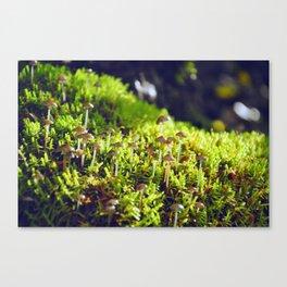 The small wild Canvas Print