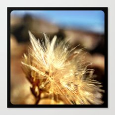 Mountain weeds. Canvas Print