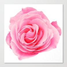 Swirly Petals Pink Rose Canvas Print