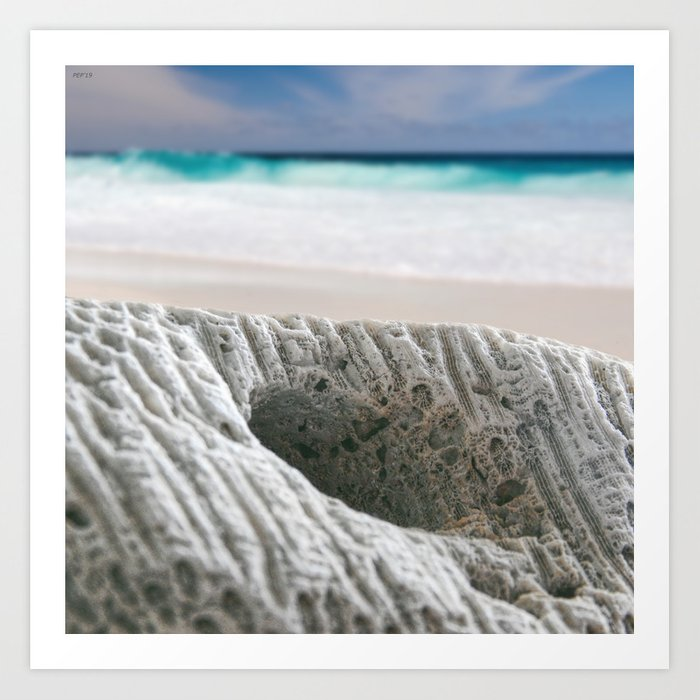 Coral By The Sea Art Print
