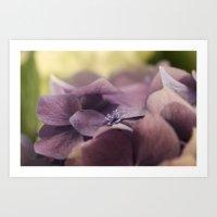 hydrangea Art Prints featuring Hydrangea by Deborah Janke