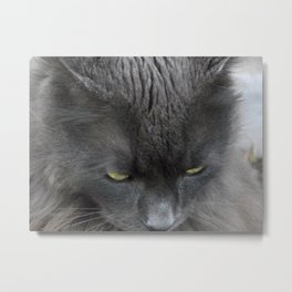 Zeus the cat Metal Print