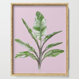 Green Leaves House Plant on Pink Serving Tray