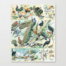 Vintage Illustration Bird Chart IV Canvas Print