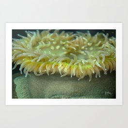 Anenome, how about you? Art Print