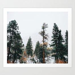 Snow Capped Pine Trees Art Print
