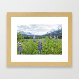Lupin and the Beauty of Alaska Framed Art Print