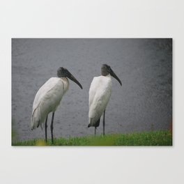 Wood Storks Canvas Print