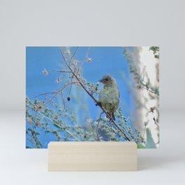 Spying September Goldfinch Mini Art Print