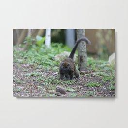 Curious Lemur Metal Print