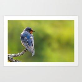 Profile of a Barn Swallow Art Print