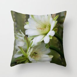 Cereus Morning  Throw Pillow
