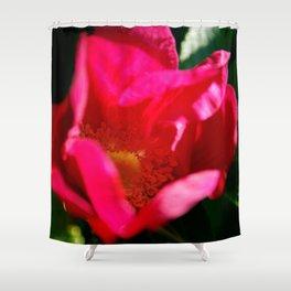 Glowing Wild Alaskan Rose by Mandy Ramsey, Haines, Alaska Shower Curtain