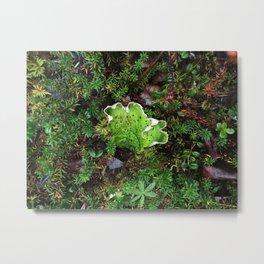Lichen Light Metal Print
