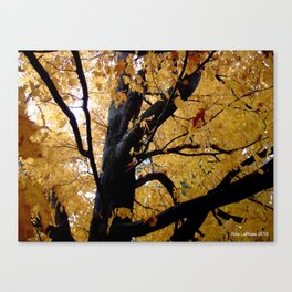 October branches Canvas Print