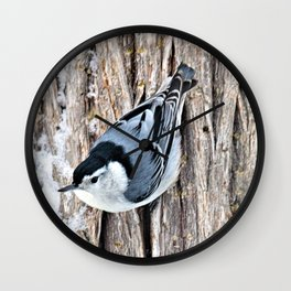 White-breasted Nuthatch Wall Clock