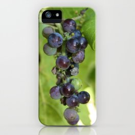 Grapes on a Vine iPhone Case