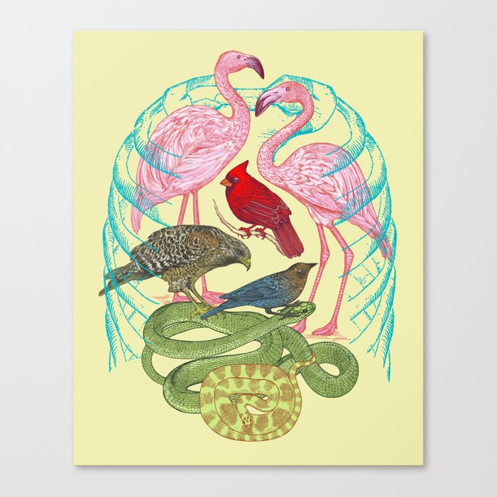 Wild Anatomy II Canvas Print