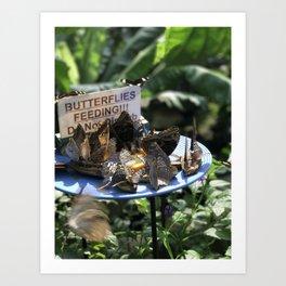 Butterflies Feeding Art Print