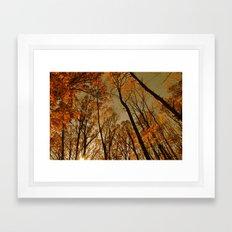 The Light in the Forest Framed Art Print