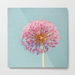 Pink Allium Metal Print